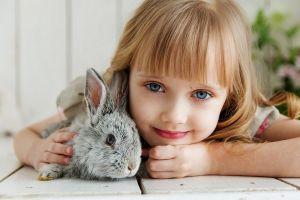 Jak chovat králíka?