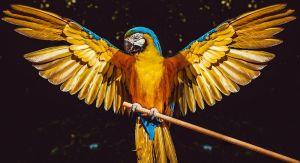 Jakého papouška si vybrat?