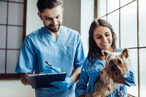 Naučte psa, aby měl rád veterináře