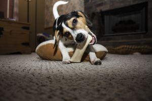 Může pes kosti?