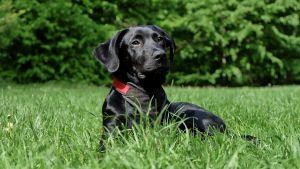 8 tipů jak předcházet rakovině u psů