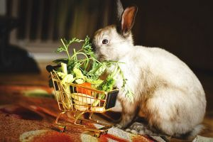 Krmíte svého králíka správně?