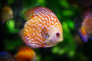 Nemoci akvarijních ryb 1. část