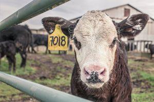 Nemoc šílených krav