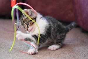 Jak zabavit kočku