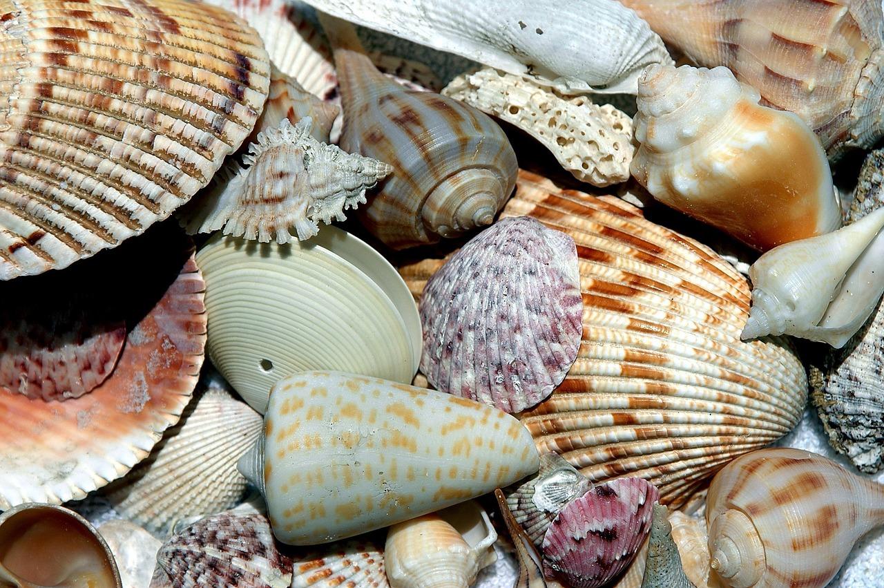 Sea Shells 1886613 1280