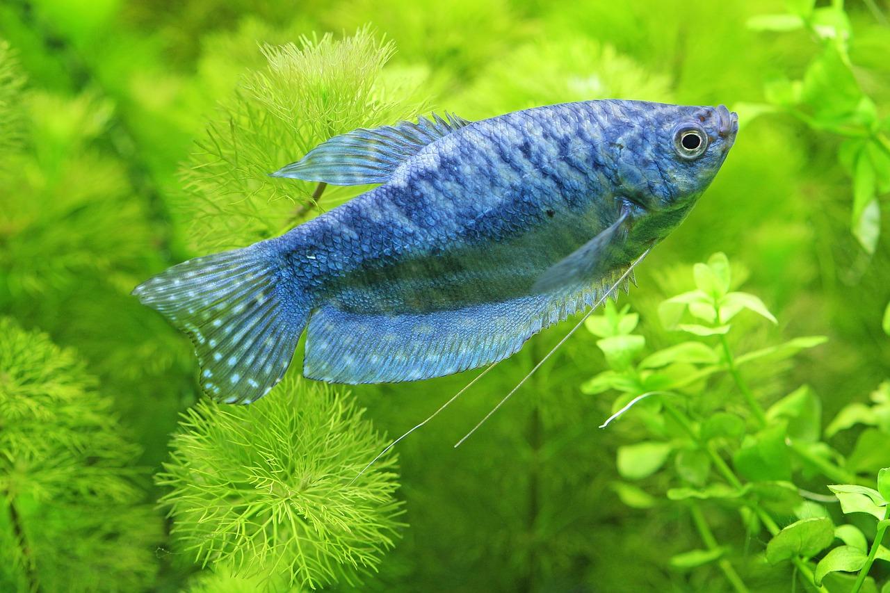 Dekorace a rostliny do akvária: jaké vybrat?