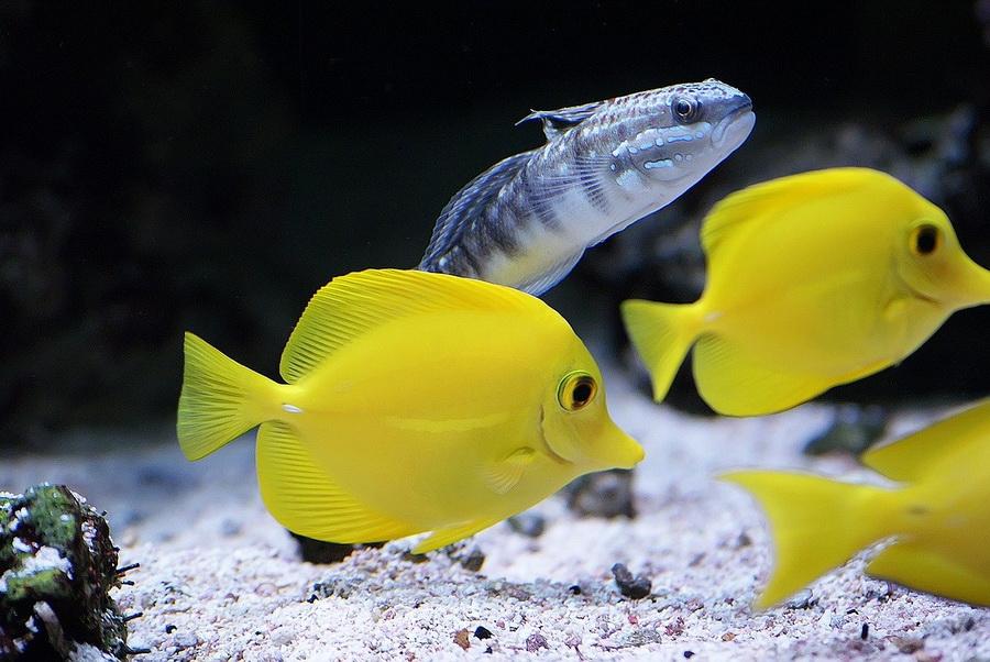 Výživa akvarijních ryb