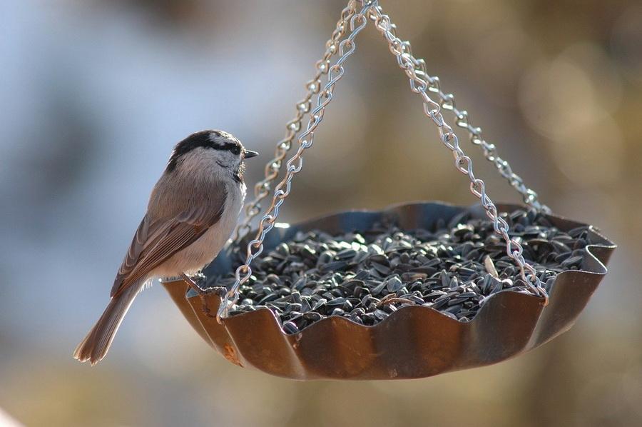 Jak krmit ptactvo v zimě